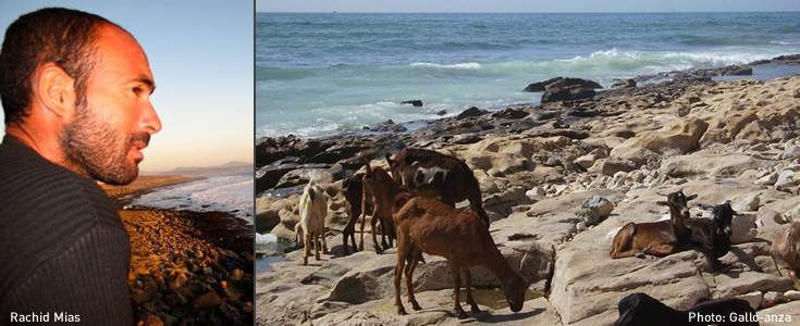 Goats on the beach near Anza
